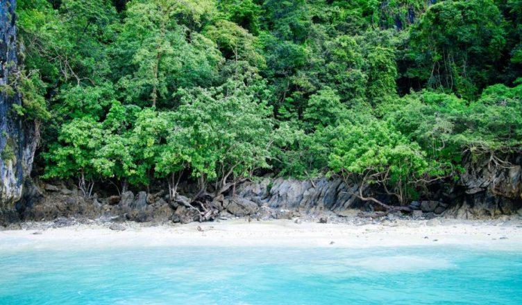 Foresta Nazionale Caraibica costa