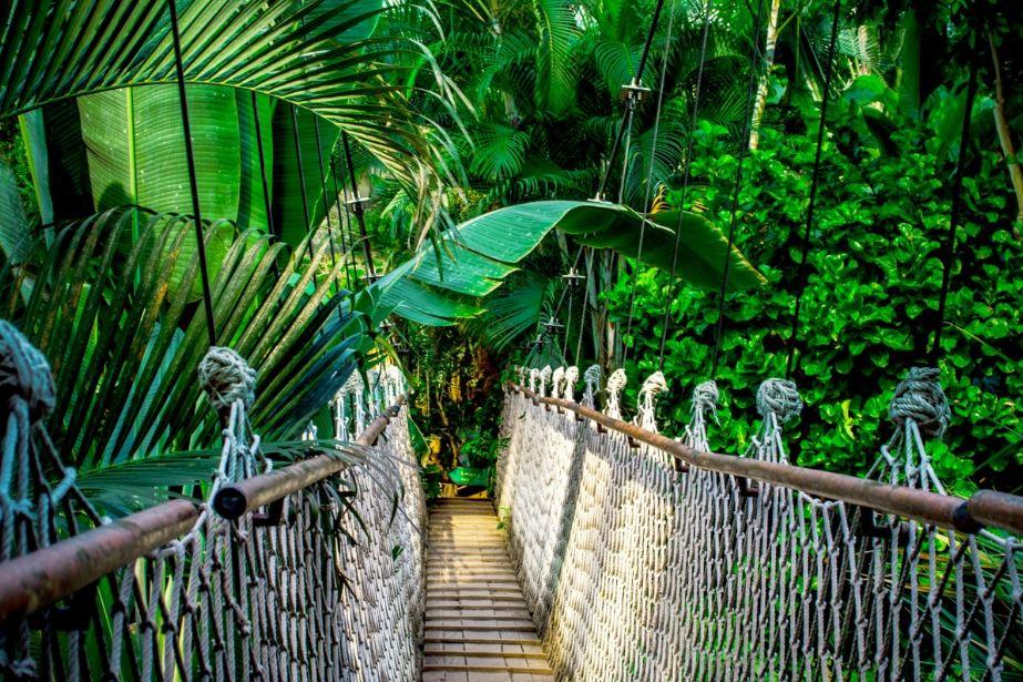 Foresta Nazionale Caraibica