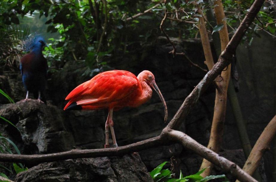 fauna foresta pluviale